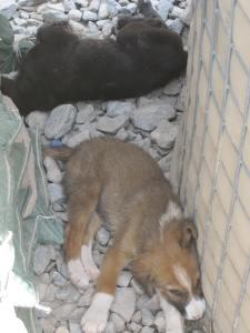 Camp puppies