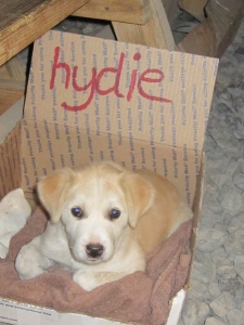 Hydie in her box (I call her Precious).